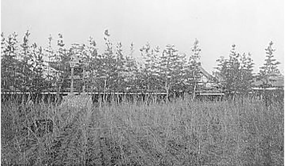 松の木の後ろに庫裏本堂鐘楼が見える